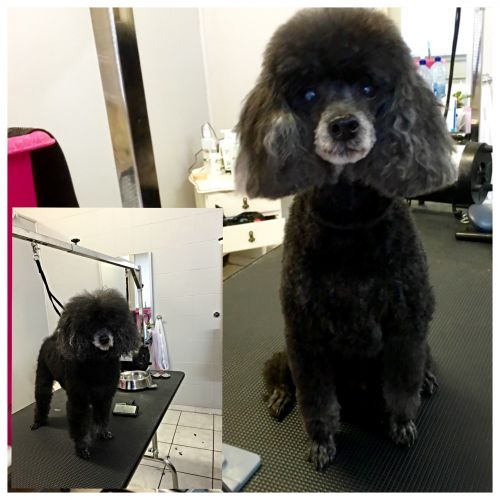 Aloha K9 Services Dog Grooming  Training